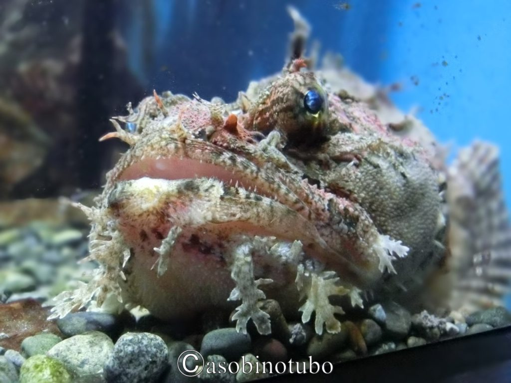 杜の都で海を堪能╿仙台 うみの杜水族館