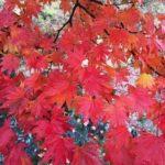 【紅葉の旅 】 白馬・小谷・栂池・乗鞍高原3泊4日の旅 2017.10.13~16