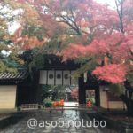 【特集】紅葉の京都を1泊2日で楽しむ旅|清水寺、今宮神社、船岡温泉、渡月橋、あぶり餅